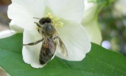 La mort des abeilles…  bientot celle de la cupide race humaine.
