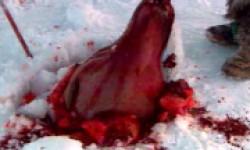L'élevage des visons ,et autre animal a fourrure, honte a la race humaime