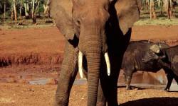 Le roi d 'espagne ,president d'honneur du WWF ……Chasse aux trophées d'animaux : de la polémique au scandale