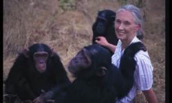 Comment se fait-il que l'espèce dite la plus «intelligente» sur cette planète soit en train de la détruire?