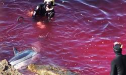 ^ Massacre de dauphins au Japon : que se passe-t-il dans la baie de Taiji ?